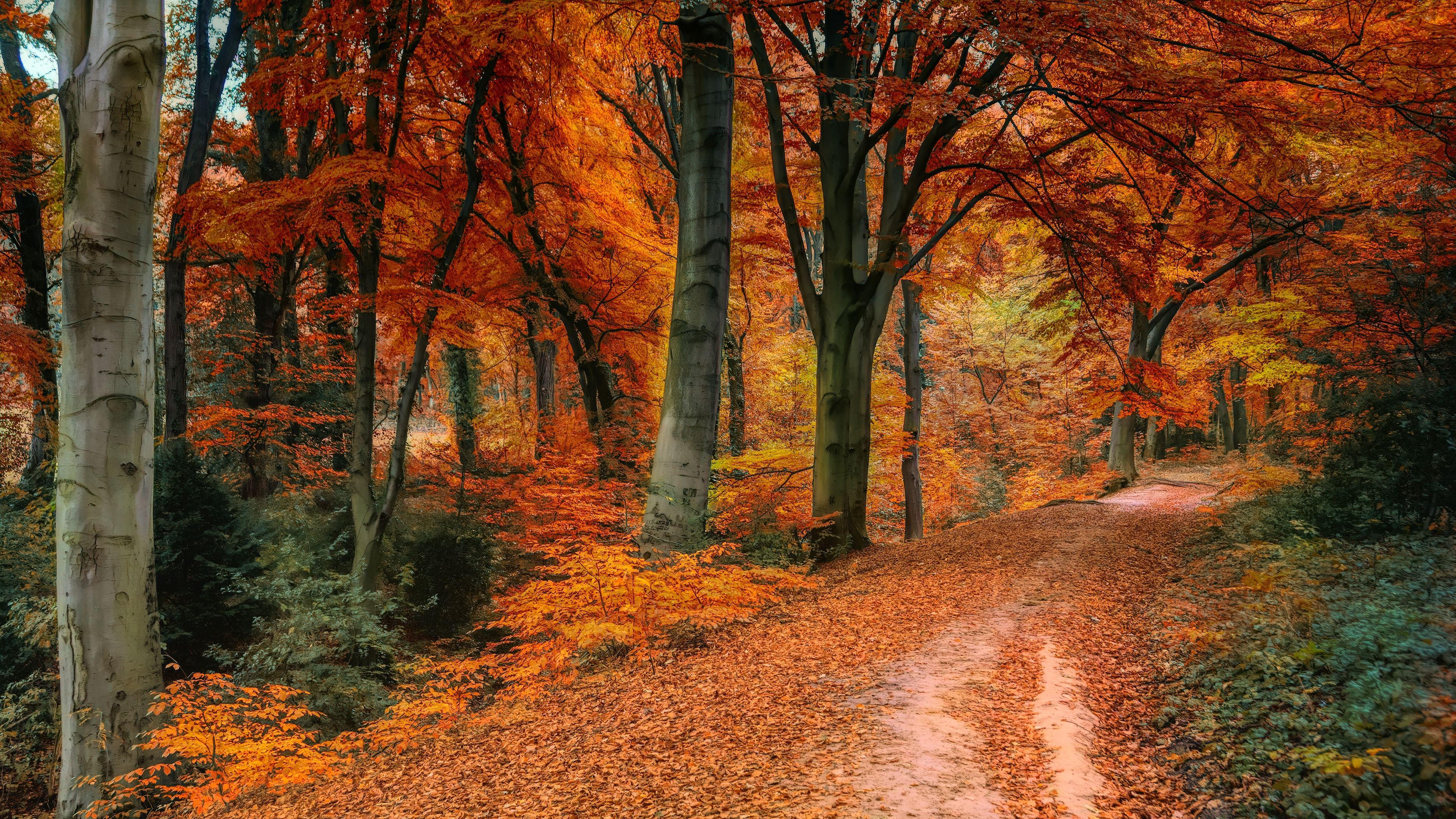 Schöne Herbstbilder Kostenlos : sch ne herbstbilder kostenlos ~ A.2002-acura-tl-radio.info Haus und Dekorationen